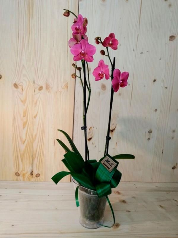 Orquídea morada en maceta