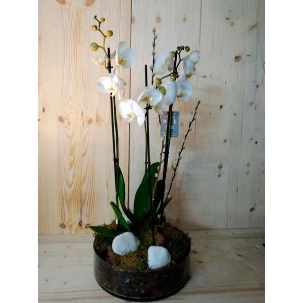 Orquídea en maceta de cristal